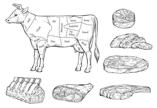 Meat cuts diagram for butcher shop line sketch vector illustration isolated.