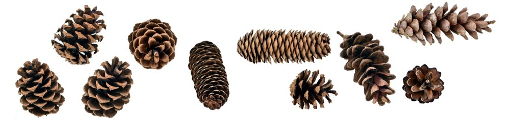 A big set of coniferous cones, spruce, pine, fir, from different angles, isolated on a white background
