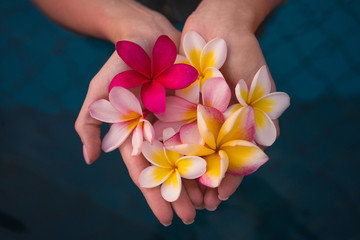 Spoed Fotobehang Frangipani plumeria in the hands of the girl