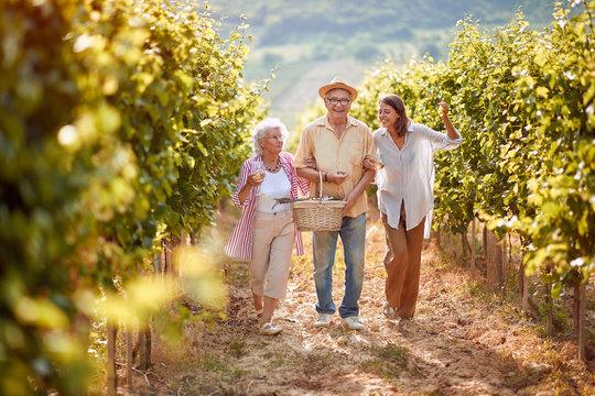 Ripe grapes in vineyard. family vineyard. Smiling family walking in between rows of vines .