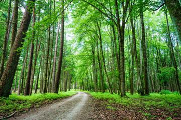 Foto auf Acrylglas Grun A footpath in the forest