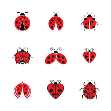 Beauty bug vector illustration icon