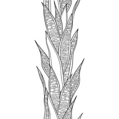 Vertical seamless pattern with outline Sansevieria or snake plant or mother-in-law's tongue black leaf on the white background.