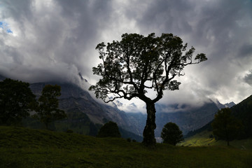 Mountain landscape with a tall tree in the foreground