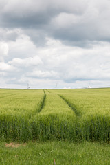 Big grainfields in the middle of the german countryside