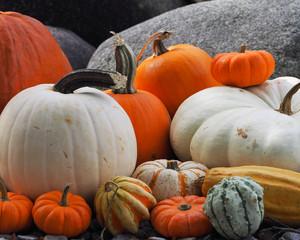 Colorful Pumpkin Patch - 424