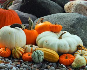 Colorful Pumpkin Patch - 430