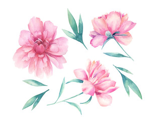 Watercolor floral set. Hand drawn  illustration with peonies.