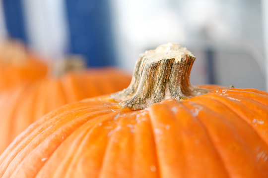 A closeup of a stem on an orange pumpkin.