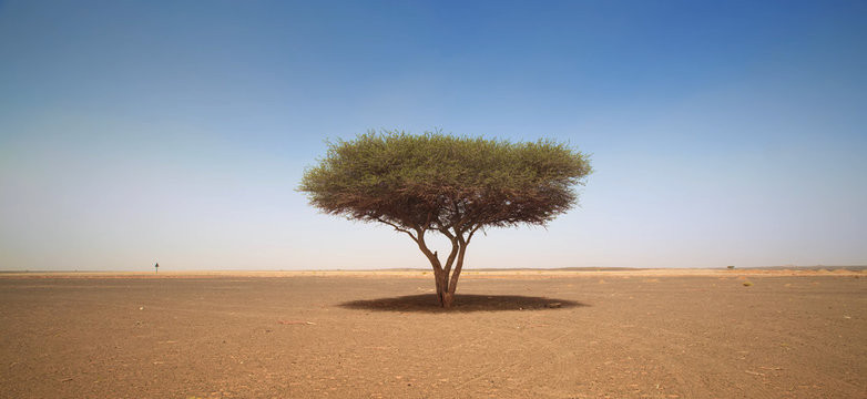 The only tree is a warm desert