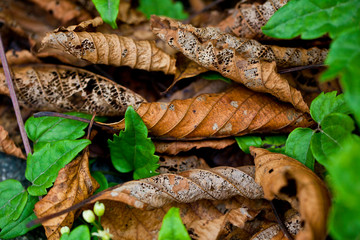 rhythm of nature and the beauty of the leaves