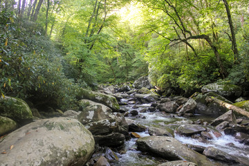 River covered by forest in Smoky mountains in North Carolina, USA