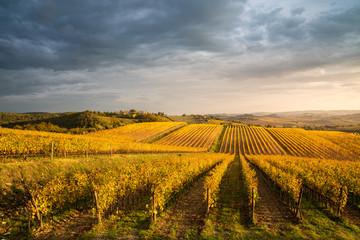 Poster Wijngaard Golden vineyards in autumn at sunset, Chianti Region, Tuscany, Italy