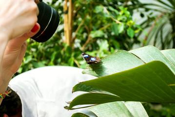 Macro photography, fotografia macro di farfalle, fiori e altri insetti