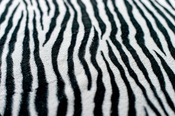 Zebra black and white background image Beautiful visual concept