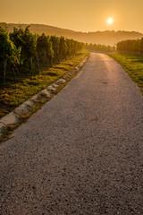 Straße Feldweg Weg im Weinberg mit Sonne am Morgen