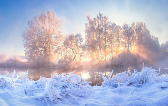 Winter nature landscape. Frosty trees on river side. Winter morning sunrise. Amazing plants covered by hoarfrost