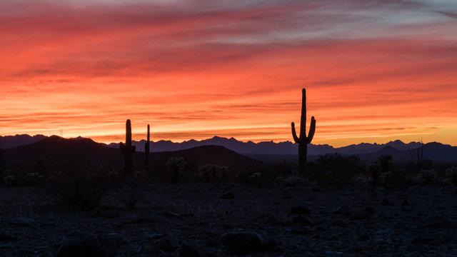 Sunset in the Arizonan desert with silhouetted saguaro cactus