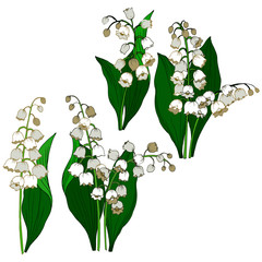 Bouquet of lily of the valley in color, lilies of the lily of the valley