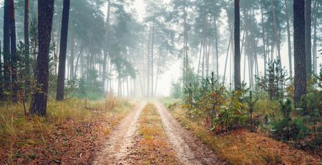 Road through foggy autumn forest