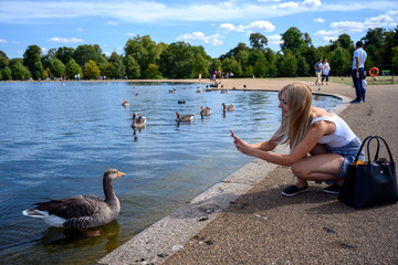 Young blonde woman with mobile phone, photographing birds on the lake in London Hyde Park