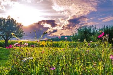 Feld mit Wildblumen