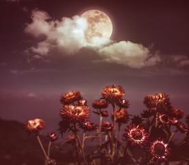 Wall Mural - Nighttime sky with clouds and full moon with shiny.