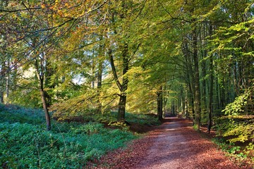 Photo Stands Road in forest Pathway in the middle of trees in Forêt de Soignes, Brussels, Belgium at daytime