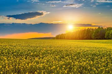Fototapeta Piękny krajobraz o zachodzie słońca nad polami rzepaku, Podlasie obraz
