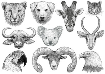 Animal portrait collection illustration, drawing, engraving, ink, line art, vector