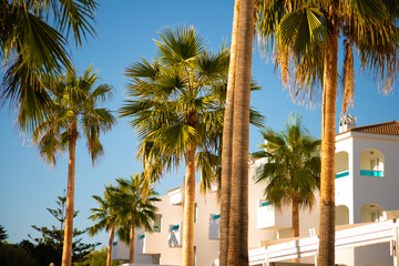 Palm trees with white building and perfect blue summer sky beyond taken in Menorca, Spain Wall mural