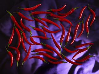 Rote Chillischoten auf farbigem Untergrund