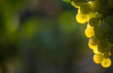 close-up of a wine strain Fototapete