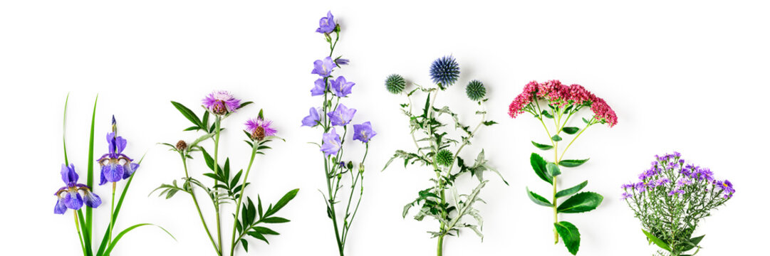 Garden flowers collection