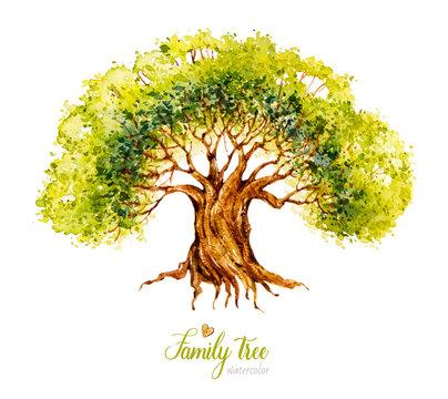 Watercolor tree. Genealogical Family tree. Watercolor botanical illustration. Nature. Deciduous Tree.