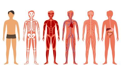 Cartoon Color Human Body Anatomy Set. Vector