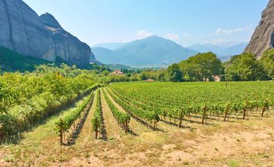 Foto auf Leinwand Weinberg Rural landscpe with vineyard