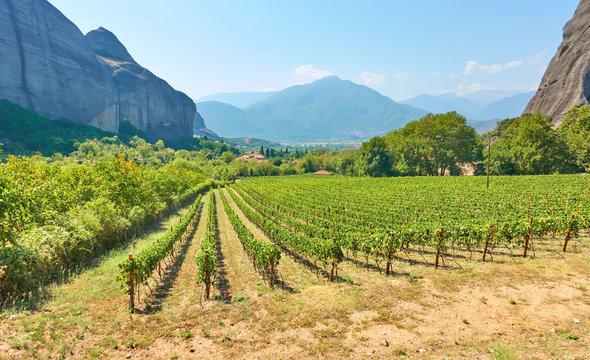 Rural landscpe with vineyard