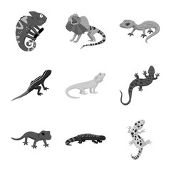 Vector illustration of wild and exotic icon. Collection of wild and fauna stock symbol for web.
