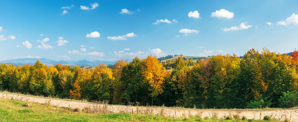 trees in colorful foliage on a sunny day. gravel road across the panoramic landscape in mountains. fluffy clouds on the blue sky. ridge in the distance