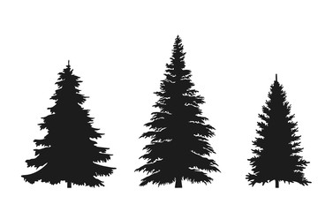set of fir tree silhouette. Christmas and New Year design elements. Christmas trees