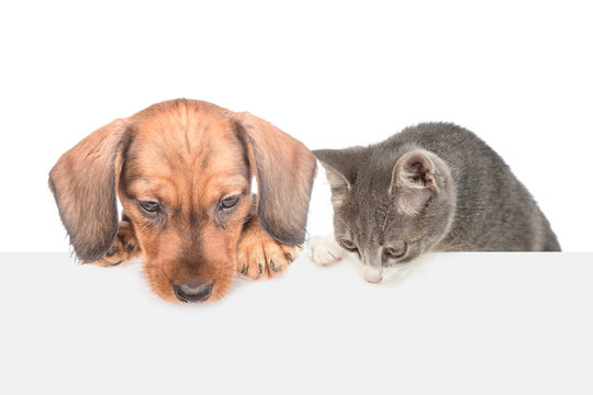 Cat and dog over white banner looking down on empty space. isolated on white background