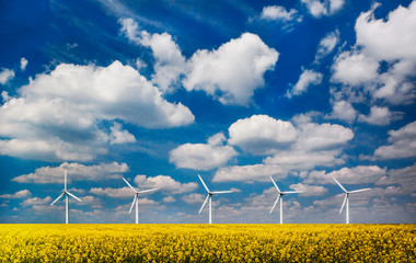 Wind turbines in a field under blue skies