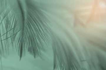 Beautiful feather color cool light green pattern  texture background with orange light Wall mural