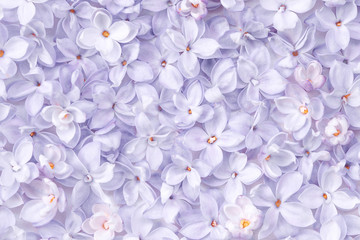 Wall Murals Lilac Realistic lilac flower bed backdrop. Floral top view. Bunch of violet, purple flowers.