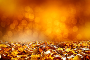 autun leaves of free space for your decoration and brown color