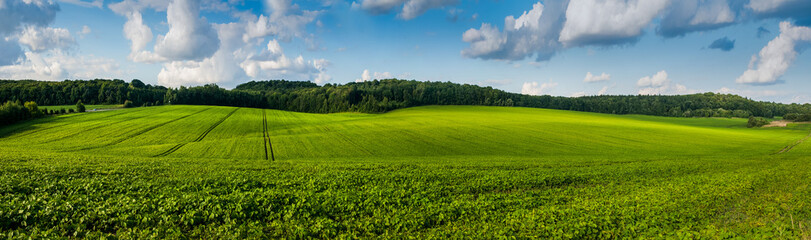Foto auf AluDibond Kultur fresh green Soybean field hills, waves with beautiful sky