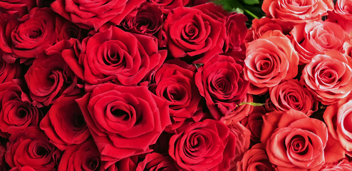 Bunch Of Red Roses background Valentine's Day