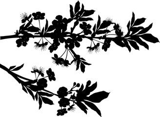 silhouette of blossom sakura two branches