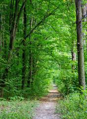Aluminium Prints Green Forest trees. nature green wood sunlight backgrounds